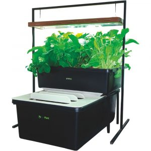 FishPlant Family Aquaponic Unit-3977