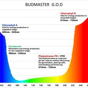 Budmaster II Osram Gold Delux-4941